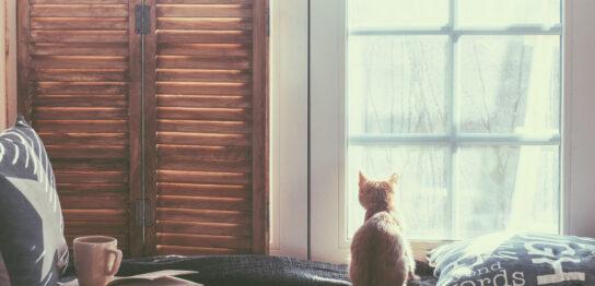 窓 希望の光